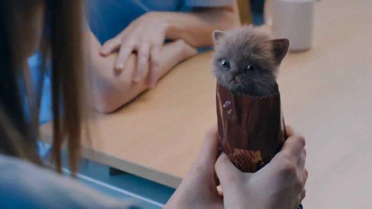 McVities Digestive Biscuits Advert – Kittens
